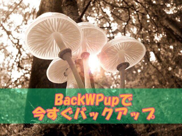 BackWPup今すぐバックアップ (1)